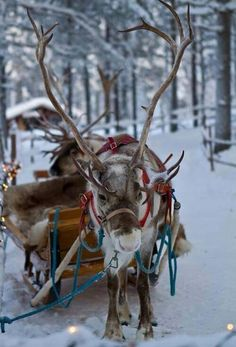 Beautiful reindeer. Captures the magic of Christmas.