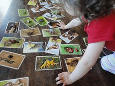 Learners in Bloom: Animal Matching Activity