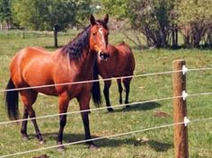 As the expression goes, avoidance is superior to anything cure, and you can keep your stallion, Horse clipper (máquina tosquiar cavalo) or jackass from turning into a casualty of Laminitis by limiting their admission of green grass and grain. Lavish green grass and grain decreases lactic corrosive. Shockingly, it is somewhat of lose-lose situation, circumstance, since steeds kept in meager enclosures or fields can in any case create dietary instigated Laminas (clipper machine blades).