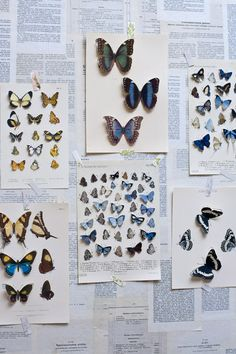 Lovely idea: art prints of butterflies, cut along the edges and raised to look like real butterflies.