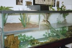 turtle tank with nesting box Turtle Care, Pet Turtle, Baby Turtles, Paludarium, Vivarium, Reptiles, Red Ear Turtle, Turtle Dock, Turtle Enclosure
