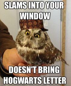 Stupid owl