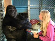 A Conversation With Koko The Gorilla - PBS Nature (1999) - YouTube