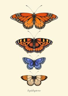Wall Art Prints, Fine Art Prints, Poster Prints, Posters, Heaven Art, Scientific Drawing, Cute Wallpaper Backgrounds, Wallpapers, Butterfly Drawing