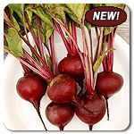 Organic Aviv Red Beet - Aviv was bred for highly uniform roots and that is exactly what impressed us about this variety in our trials. This improved open-pollinated variety has been selected for quality and produces attractive globe shaped, slightly flattened red beets. Flavor is earthy with a balanced sweetness.