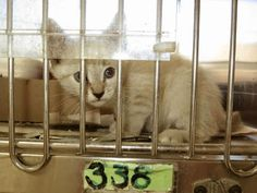 A Downey Cat Blog: Downey CA: NEED PLEDGES FOR 6 KITTENS TO GET...