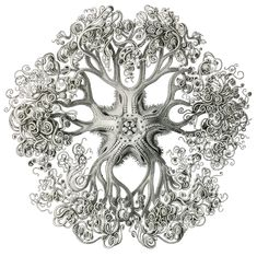 Art-Sci: Ernst Haeckel Draws a Psychedelic World Ernst Haeckel Art, Galaxy Drawings, Scientific Drawing, Free Wallpaper Backgrounds, Steampunk Octopus, Natural Form Art, Nature Illustration, Octopus Illustration, Botanical Illustration