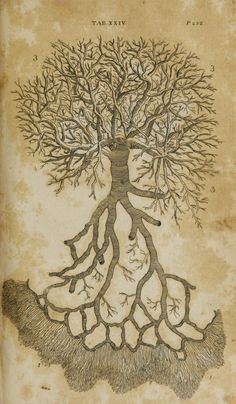 The branches of the vena porta, as are distributed in the liver. First published under the title 'Anatomy of the humane body' in London in 1713 Dedicated to Dr. Richard Mead