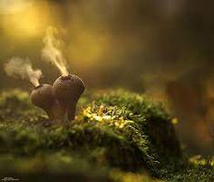 Resultado de imagen para fotografías de hongos hermosos