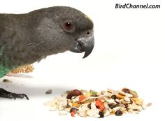 Find out everything your pet bird eats, from bird seed to pellets to vegetables to fruits to proteins and more.