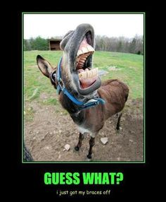 LOL got my braces off. Braces Humor, Dental Humor, Braces Off, Dental Braces, Funny Animal Pictures, Funny Animals, Cute Animals, Funny Horses, Orthodontic Humor