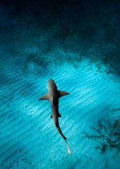 Shark in the deep.