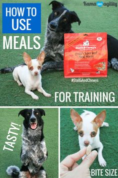 Using Meals to Boost Your Results #StellaAndChewys | Kama ❤️'s Agility #FreezeDried #sponsored #GrainFreePetFood