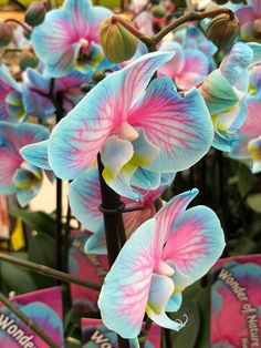 Indoor Gardens For Your Home Strange Flowers, Unusual Flowers, Amazing Flowers, Pretty Flowers, All Flowers, Purple Flowers, Weird Plants, Exotic Plants, Pink Lila