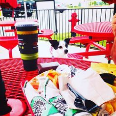 @deltaco isn't just for Whomans(humans) anymore!  Austin is a pet friendly city and you can bring your beastie with you!  Can you say WINNING!   @sendadogphoto @dogsofinstaworld @worldofcutepets @cutepetclub #dogsofinstagram #dogstagram #instadog #dog #austindogs #puppylove #woofwoof #petstagram #dogsofig #dogslife #lovedogs #worldofcutepets #dogoftheday #gooddog #dogsoftwitter #mustlovedog #barkbox #dyson #petlover #rescuedogs #instapets #austin #dogsofaustin #igdogsdaily#dogsof512…