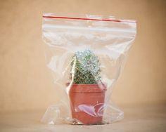 L'amore fa male by Loulou, la petite aubergine, via Flickr