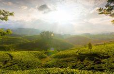 Mountains in Kerala #honeymoon #keralahoneymoon #tripndays