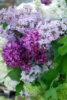 My Grandmother's Flower Garden, Lilacs & Viburnum | Home is Where the Boat Is