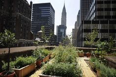 Photo: Rooftop garden and apiary on InterContinental New York Barclay Hotel