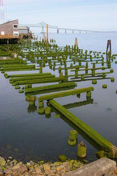 Moss covered piers- Astoria Oregon
