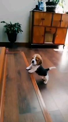 Super Cute Puppies, Cute Baby Dogs, Cute Funny Dogs, Cute Dogs And Puppies, Cute Funny Animals, Cute Babies, Doggies, Baby Animals Pictures, Cute Animal Videos