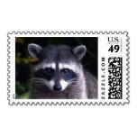 Add stamps to all your different types of stationery! Find rubber stamps and self-inking stamps at Zazzle today! Racoon, Custom Stamps, Self Inking Stamps, Postage Stamps, Stationery, Lovers, Papercraft, Paper Mill, Office Supplies