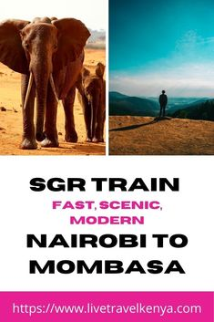 SGR Train Nairobi to Mombasa : the cheap and easy way to the coast  #backpacker#backpacking#nairobi#getaway#holidays#kenya#ilovetravel#instago#africa#kenyatrain#instatravelling#mytravelkenya#roadtrip#tourism#tourist#traveladdict#travelblog#travelblogger#travelbug#traveldiaries#traveler#travelingram#traveller#travellife#travelling#travelphoto#travelpics#travels#traveltheworld#visiting