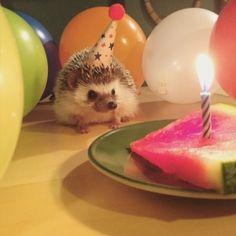 hedgehog with birthday hat