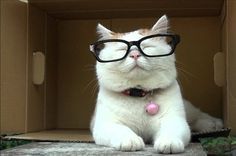 18 Cats Who Think They're Librarians In online MLIS programs, no one knows you're a cat.
