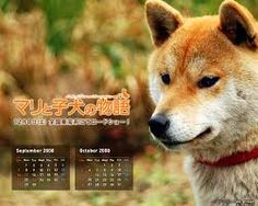 Image result for hachiko Hachiko, Akita Dog, Husky, Corgi, Fox, Japan, Animals, Image, Corgis