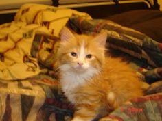 Toby Cat | Pawshake Etobicoke