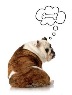 Humans aren't the only ones who need to watch their weight. Learn how to keep your pet healthy. Bulldog Quotes, Animals And Pets, Cute Animals, Pet Insurance For Dogs, Pet Corner, Healthy Pets, Pet Treats, Pet Life, Pet Health