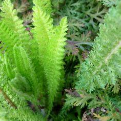 Les plantes - Cuisine Sauvage ASBL