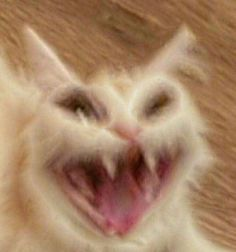 BTS Cats – Clips & Carthoons – – Animales Gracio … - Funny Memes World 2020 Funny Animal Jokes, Cute Funny Animals, Animal Memes, Cute Baby Animals, Cute Cats, Funny Cats, Cats Humor, Ugly Animals, Smiling Animals