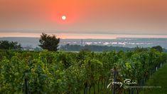 🌞 Good Morning from Mörbisch am See ☕🥐😋 (c) Jerzy Biń | www.jerzybin.eu | Zeitgenössischer Fotokunst für Dein Wohnzimmer, Schlafzimmer oder Büro.  #burgenland #neusieedlersee #see #mörbisch #mörbischamsee #fotokunst #leinwand #wandfoto #pannonien #österreich #austria #photography #fotografie #landschaftsfotografie #landscapephotography #nature #natur #inspiration #sunrise #sonnenaufgang #sky #himmel #photooftheday #canonaustria #jerzybin
