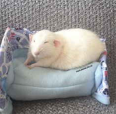 This Woman Makes Mattresses For Rats As Well As Matching Pajamas, And They're Adorable Funny Rats, Cute Rats, Animals And Pets, Baby Animals, Funny Animals, Low Maintenance Pets, Pet Rodents, Dumbo Rat, Rat Toys