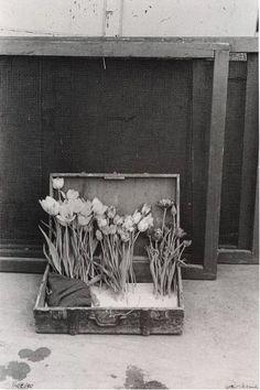 Robert Frank Suitcase of Tulips 1950