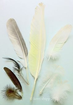 friends of a feather...