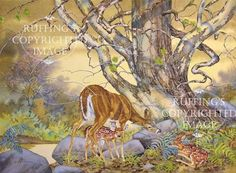 Doe with Fawns in Autumn Woods Giclee Fine Art by ruffings on Etsy, $22.00