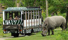 things to do in Bali - Bali Safari Marine Park is an elephant and wildlife park near Ubud