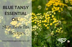 This essential oil has a herbaceous, sweet aroma. Here's how to use the blue tansy essential oil skin care! Blue Tansy Essential Oil, Blue Tansy Oil, Essential Oil Carrier Oils, Essential Oils For Skin, All Natural Skin Care, Organic Skin Care, Coconut Oil For Acne, Best Skin Care Routine, Skin Food