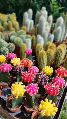 Depression, Anxiety, Succulents, Flowers, Plants, Florals, Succulent Plants, Planters, Stress