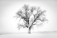 The Tree by Vera Greiner on
