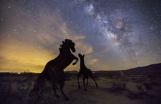 The Night time Stories Photo by Manish Mamtani -- National Geographic Your Shot