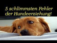 unbedingt anschauen Mein Hund, der Allesfresser ! (Hundeerziehung, Hundeschule, Training, Hunde) - YouTube