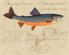 Blueback trout giclee print by Matt Patterson.
