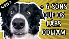 [ NOVO! ]  6 SONS QUE OS CACHORROS ODEIAM OUVIR  Parte 2 - http://cachorrofofo.com.br/6-sons-que-os-cachorros-odeiam-ouvir-parte-2/ - Para Ver Mais Dicas Como Esta: Acesse!  http://cachorrofofo.com.br