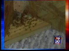 A Florida family is suing a rental company after they said they rented a bed that was infested with bed bugs. Ace Exterminators