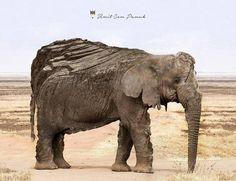 Stone Elephant By Umit Cem Pamuk by umitpamuk.deviantart.com on @DeviantArt
