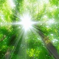 Find high quality trees of leaves wallpapers wallpapers and backgrounds on Desktop Nexus. Page 1 Forest Pictures, Sun Flare, 2017 Images, Light Of The World, Nature Tree, Tree Forest, Trees To Plant, Sunlight, Northern Lights